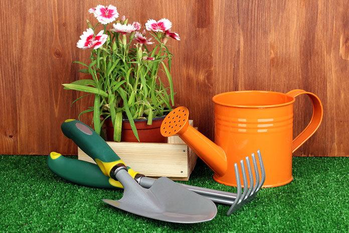 Dla początkującego ogrodnika – 7 roślin łatwych w uprawie